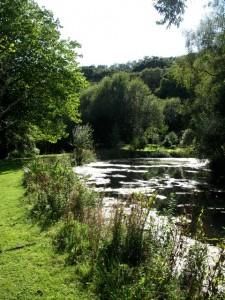 Idless Mills Garden